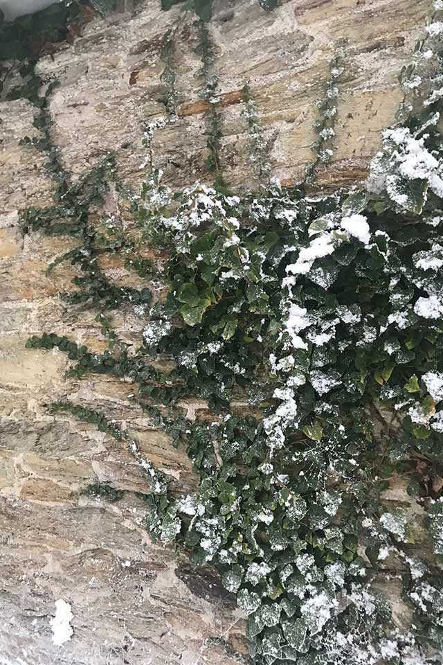artificial snow on the wall of Treseren at Celtic & Co photoshoot