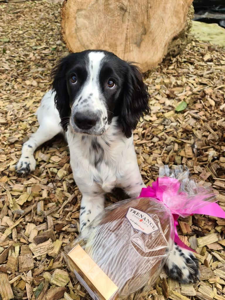 Easter egg hunt with dog