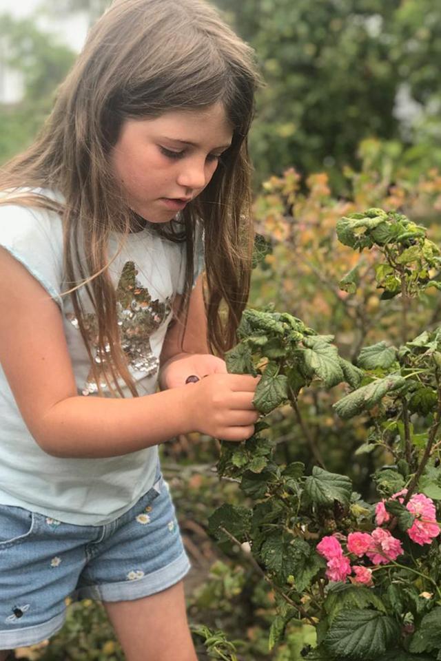 Girl blackberry picking to make jam