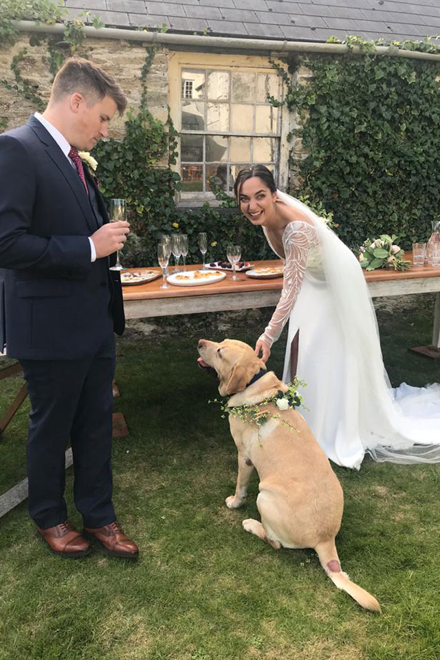 bride and groom on wedding day with family Labrador dog