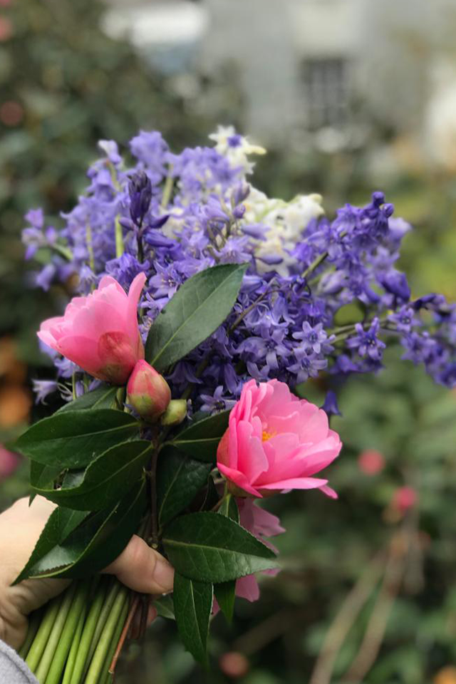 Freshly picked Cornish flowers bluebells and pink camellias from English country garden