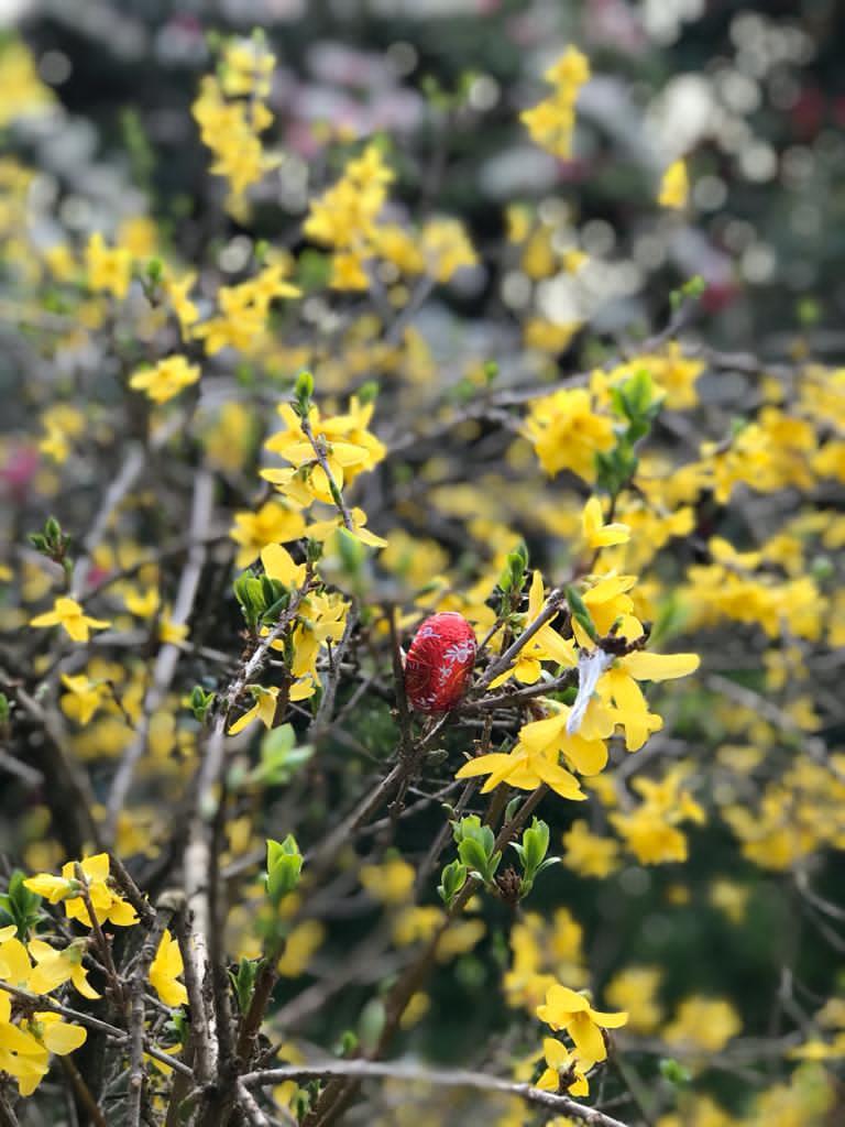 Easter egg hung in yellow Cornish gorse