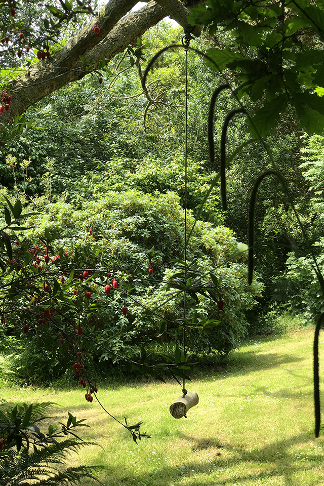 Green summer lawns in Cornwall
