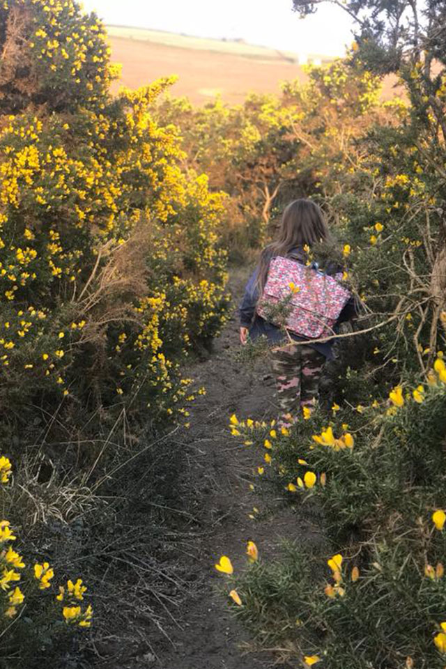 yellow gorse in Cornish hedgerows with girl walking